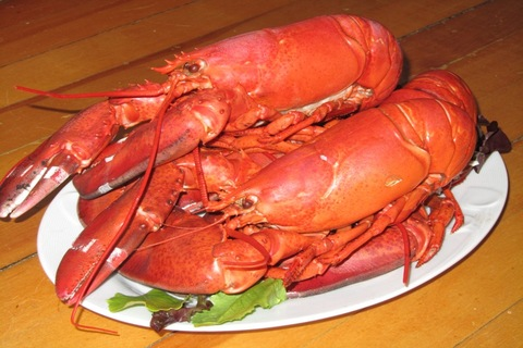 Nova Scotia, lobster, dinner, lobster festival, seafood