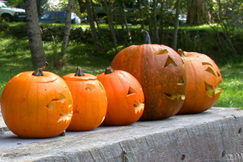 Festivals and events in Nova Scotia, shelburne pumpkin festival, things to do in nova scotia, what to do in shelburne, activities in Nova Scotia, nova scotia activies, child friendly activities